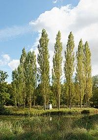 Ermenonville, parc Jean-Jacques-Rousseau, île des Peupliers 03.jpg
