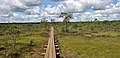 Estonia Endla Nature Reserve watch tower 01.jpg