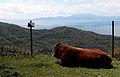 Estrecho de Gibraltar y vaca.JPG