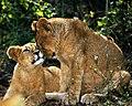 Eternal Love Thakur Dalip Singh (125862231).jpeg