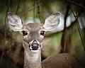 Eye contact - Flickr - Shiva Shenoy.jpg
