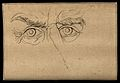Eyes expressing an imperious and passionate character, accor Wellcome V0009234EBL.jpg