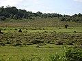 Eyeworth Wood - geograph.org.uk - 489035.jpg