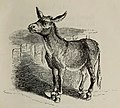 Fábulas de Samaniego (1882) (page 7 crop).jpg
