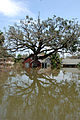 FEMA - 14971 - Photograph by Jocelyn Augustino taken on 08-30-2005 in Louisiana.jpg