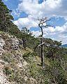 FFH Gebiet 5233-304 Muschelkalk-Landschaft westlich Rudolstadt Gölitzwände DE-TH 15.jpg