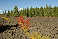Fall Color at McKenzie Pass Lava Field, Willamette National Forest (23566711969).jpg