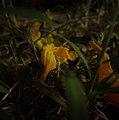Fallen flowers in golden hours.jpg