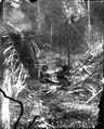 Familjeliv vid hyddorna. Mellan Rio Inambari och Rio Tambopata. Madre de Dios. Peru - SMVK - 002516.tif