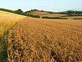 Farmland, Saunderton - geograph.org.uk - 957272.jpg