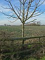 Farmland next to Crow Lane, Leicestershire - geograph.org.uk - 685089.jpg