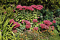 Feeringbury Manor flower border Sedum, Feering Essex England.jpg
