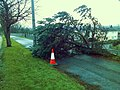 Felled tree by Great Western Road - geograph.org.uk - 655794.jpg