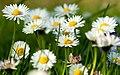 Ferozaa Flower's 1.jpg