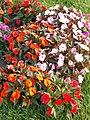 Festetics Palace garden by H. E. Milner, flowers, Keszthely, 2016 Hungary.jpg