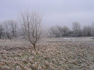 English: Field in Winter A field in winter, ta...