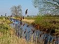 Fischland, Dierhagen11.jpg