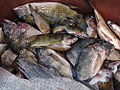 Fishes near Lake Kossou Côte d'Ivoire (2).JPG