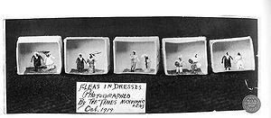 Flea circus - Fleas in dresses at Ye Olde Curiosity Shop