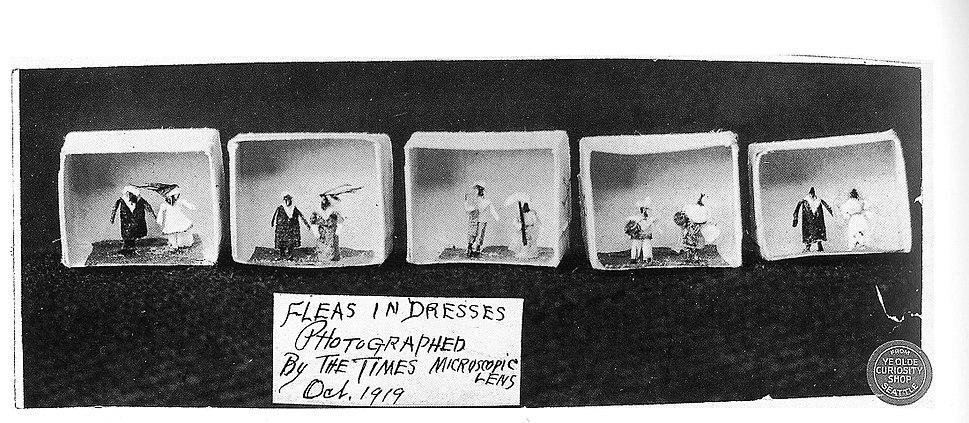 Fleas in dresses at Ye Olde Curiosity Shop