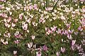 Flickr - Government Press Office (GPO) - Flowers in the Carmel Range.jpg