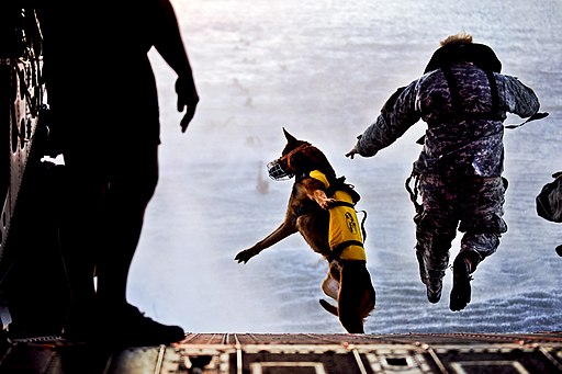 The U.S. Army - Fearless canine