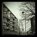 Flickr - fusion-of-horizons - Berthelot 36 (2).jpg