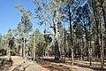 Flinders Ranges SA 5434, Australia - panoramio (118).jpg