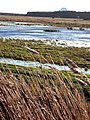 Flooded marshes on Minsmere Level - geograph.org.uk - 642984.jpg