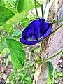 Flor azul escuro forte.jpg