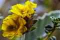 Flores da trilha do Mirante do Caim - Igatu 5.png