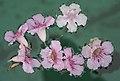 Flores pileta - 5636.jpg