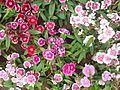 Flores varias.JPG