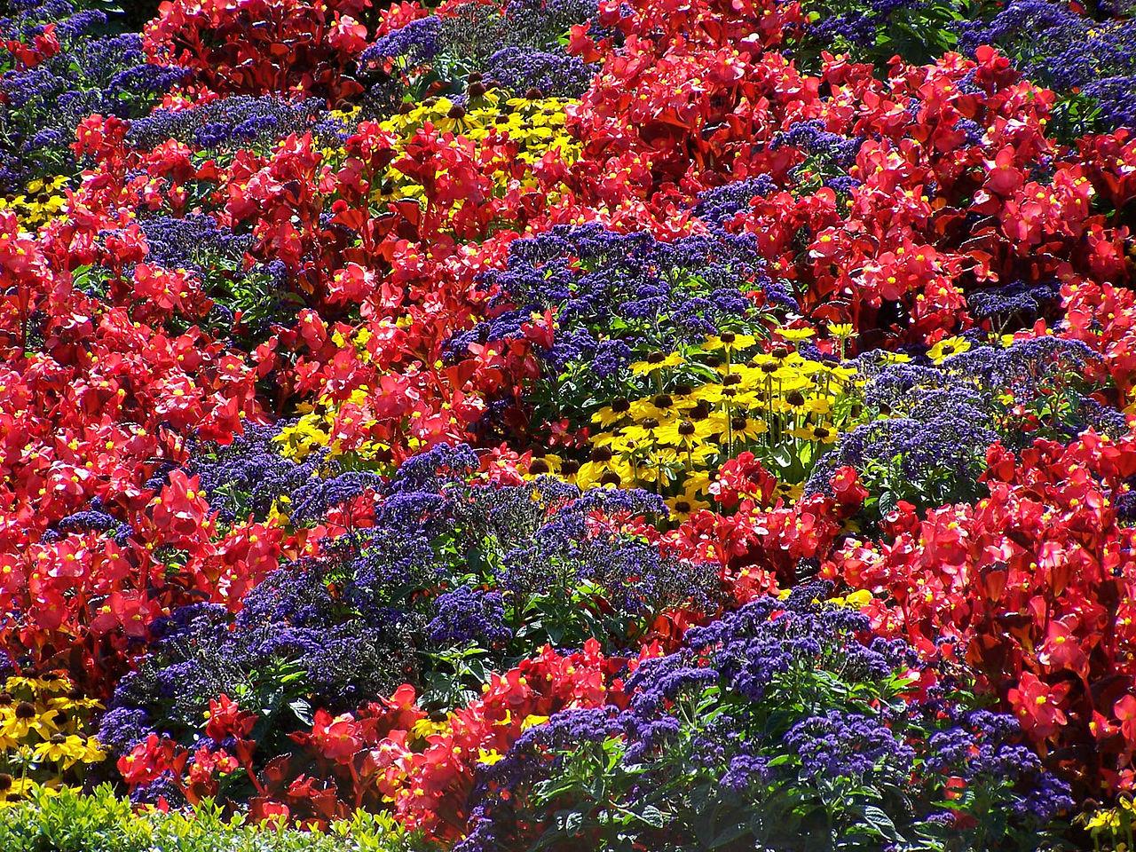 File:FlowerBed.jpg - Wikimedia Commons
