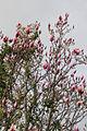 Flower 9520 (9498680197) (4).jpg
