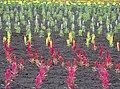 Flowers at Farm Tomita - Nakafurano - Hokkaido - Japan - 03 (48006120642).jpg