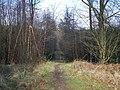 Footpath In Brereton Hayes Wood - geograph.org.uk - 681664.jpg