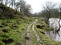 Footpath in Lower Grass Wood - geograph.org.uk - 307433.jpg