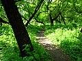 Forest - panoramio - Wolodymyr Lavrynenko.jpg