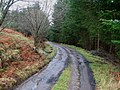 Forest Track through Glassie Wood near Aberfeldy - geograph.org.uk - 307116.jpg