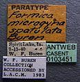 Formica spatulata casent0103451 label 1.jpg