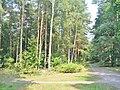 Forst Grunewald - Schlaengelpfad - geo.hlipp.de - 41370.jpg