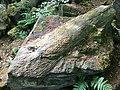 Fossilised tree trunk (Close).jpg