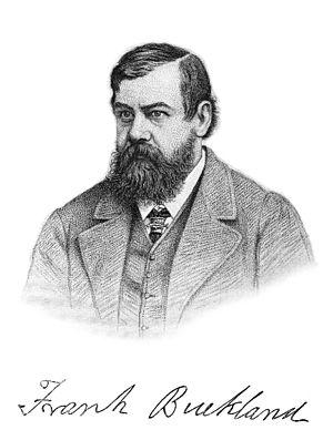 Francis Trevelyan Buckland - Image: Frank Buckland naturalist