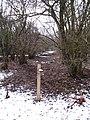 Freeholders Wood - geograph.org.uk - 1723614.jpg