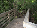 Gainesville FL Devil's Millhopper stairs01.jpg