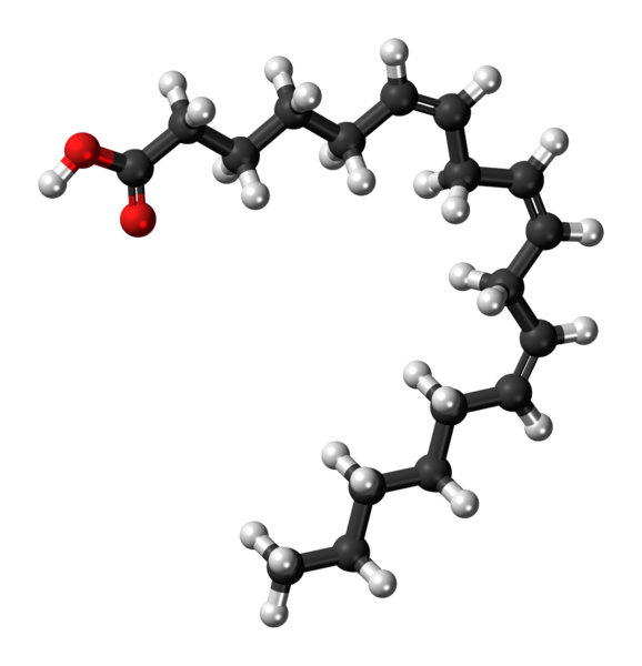 File:Gamma-Linolenic-acid-3D-balls.png - Wikimedia Commons