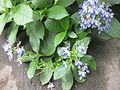 Gardenology.org-IMG 1182 bbg09.jpg