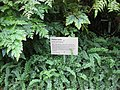 Gardenology.org-IMG 2354 rbgs11jan.jpg