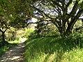 Garland Ranch Regional Park - Carmel Valley, CA - DSC06903.JPG